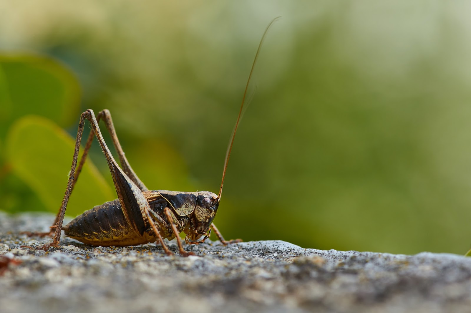 best edible insects