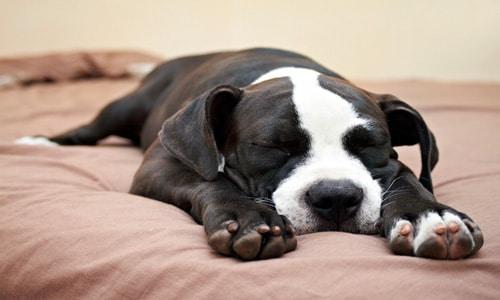 Resultado de imagen para perro durmiendo