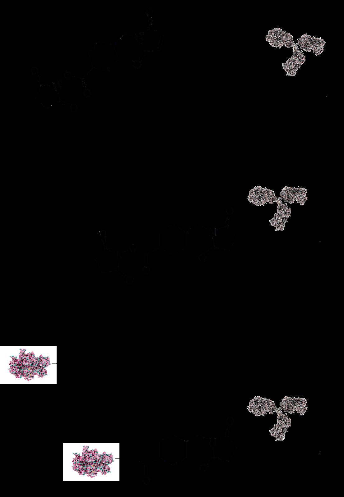 protein protein conjugation techniques utilize crosslinkers