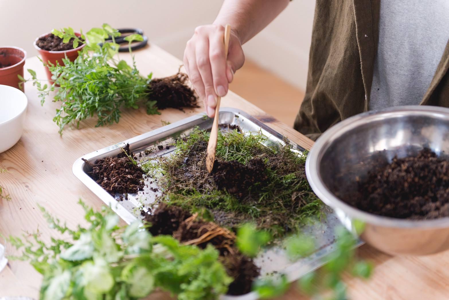 苔球製作-補土