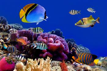 red-sea-coral-reef.jpg