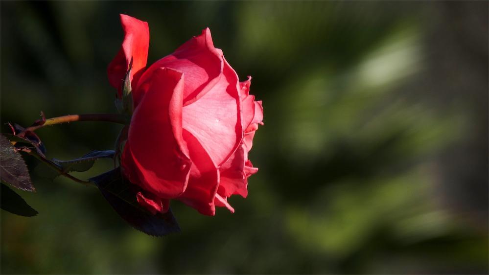 Radiant Red.jpg