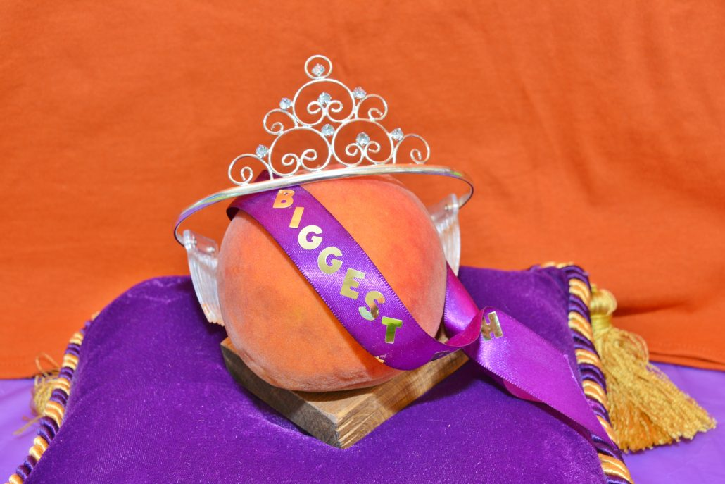 The winning peach with a crown and sash reading 'Biggest' at last year's Peach Festival