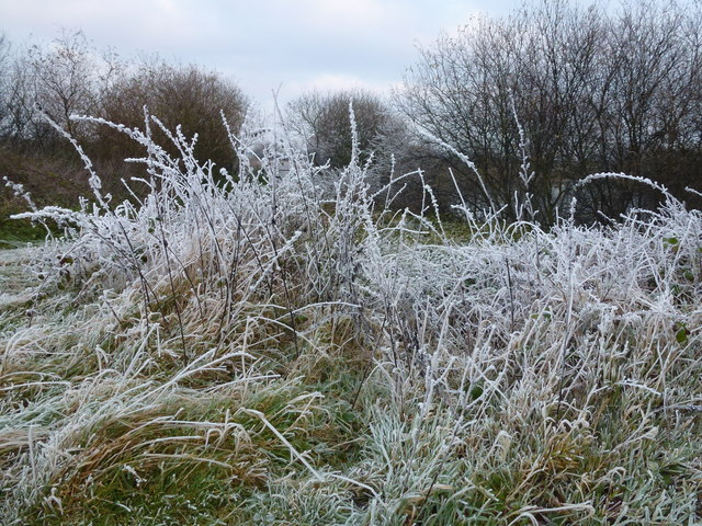 TL4389 : White grass and black