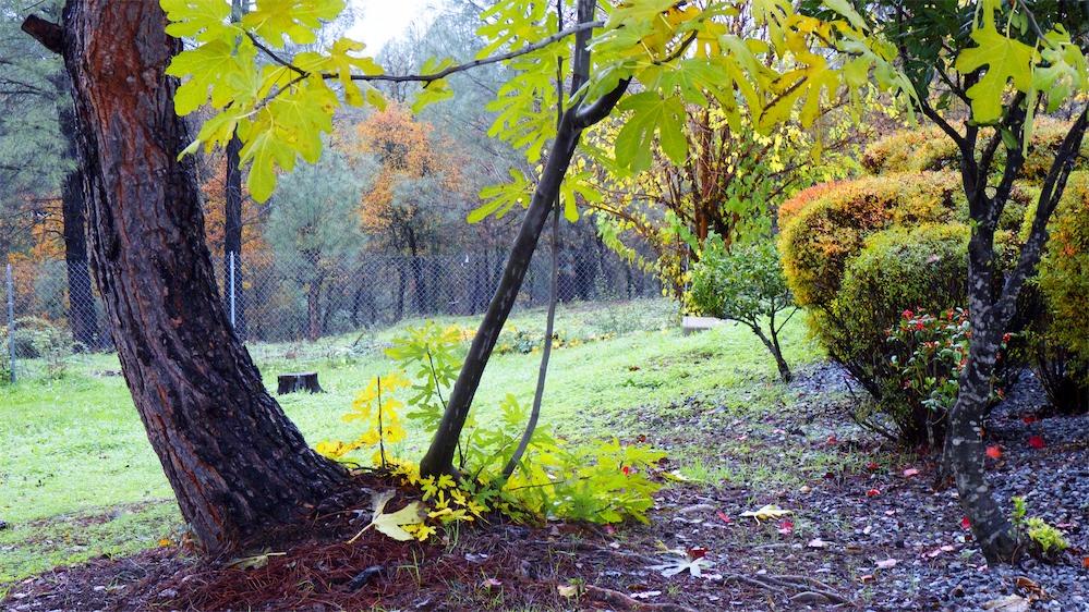 Wet Backyard.jpg