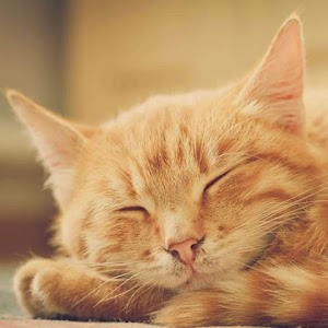 How Many Hours A Day Do Cats Sleep