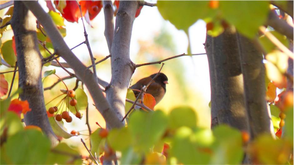 Blending Bird.jpg