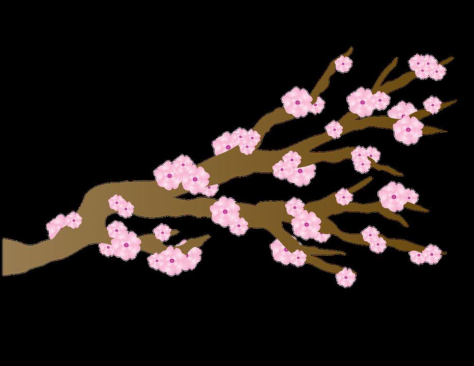 https://cdn.pixabay.com/photo/2015/10/10/02/25/cherry-blossom-980280_960_720.png