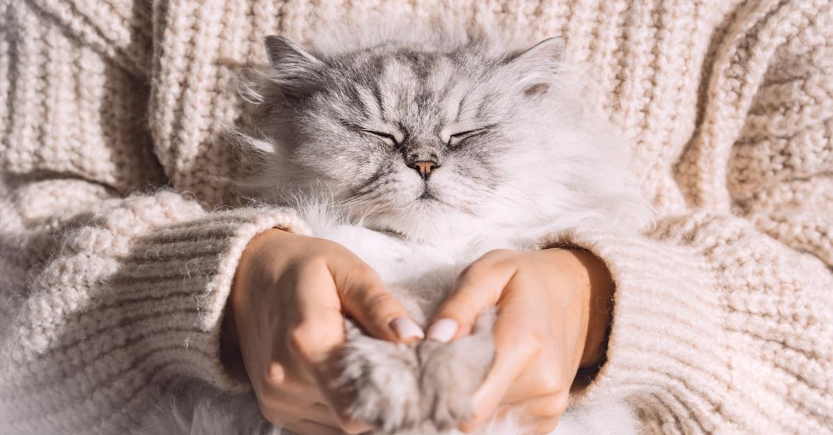 le langage corporel des chats est important pour se faire comprendre