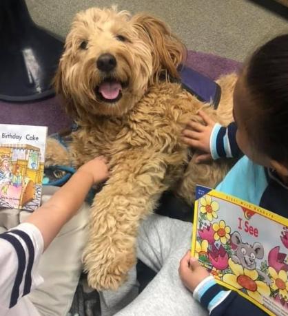 dog reading on Facebook Live