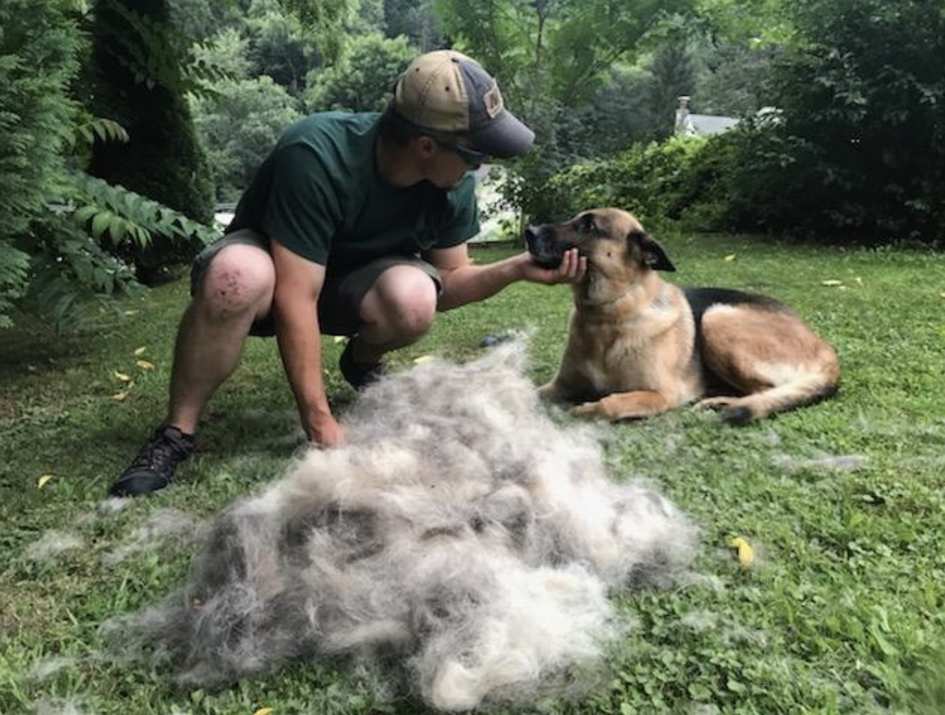 Man petting his German Shepherd dog behind a huge pile of dog hair that has been brushed off of the dog