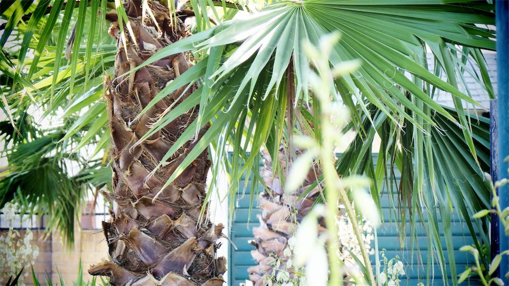 Jungle Scene.jpg