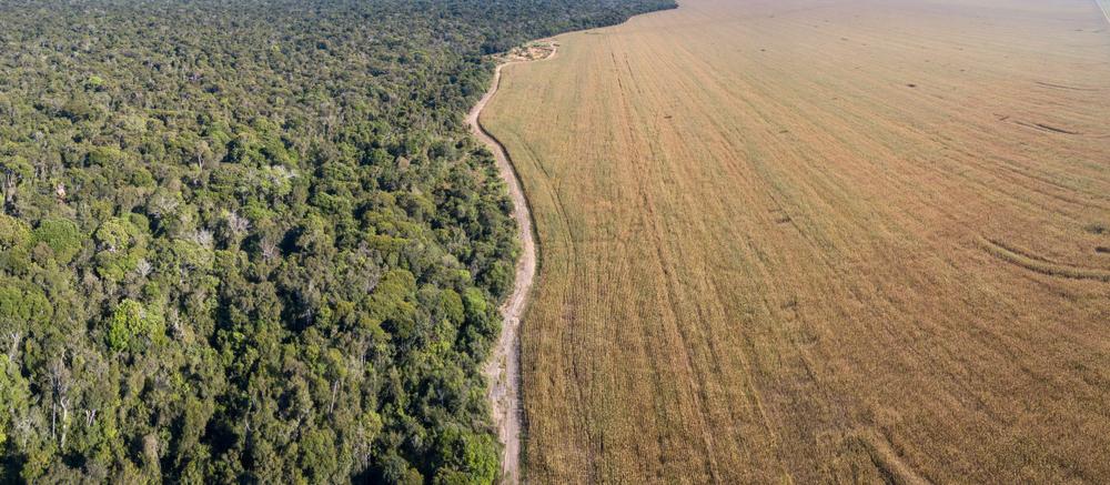 Modo de vida indígena pode ajudar na preservação de biomas. (Fonte: Paralaxis/Shutterstock)