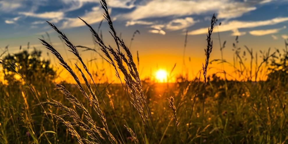 Mudança climática na agricultura