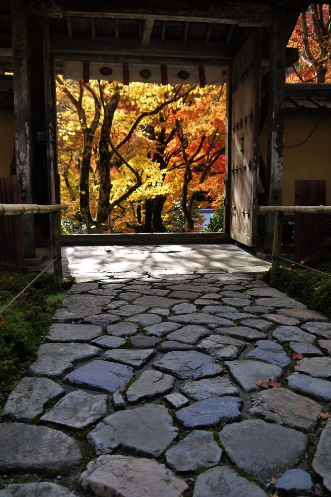 Autumn in Kyoto, Jakkoin temple