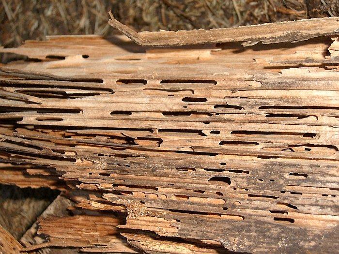 Holzschaden.jpg