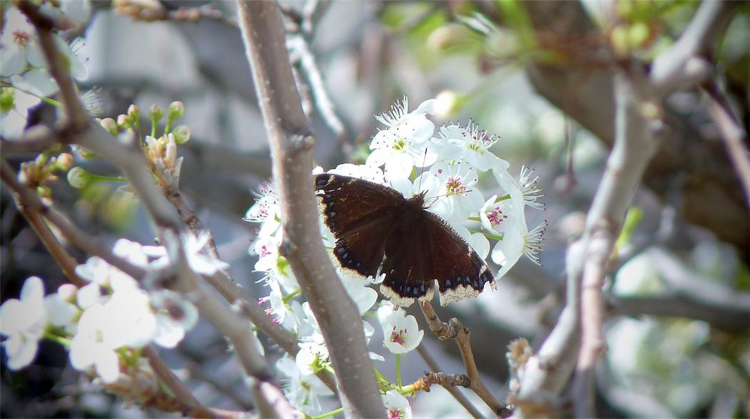 Morning Butterfly.jpg