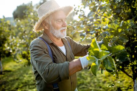 Pruning Stock Photos And Images - 123RF
