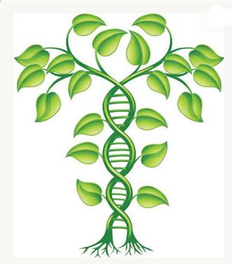 Ancestor confirmed by autoaomal dna, Linda Geddes, ancestry.com.jpg