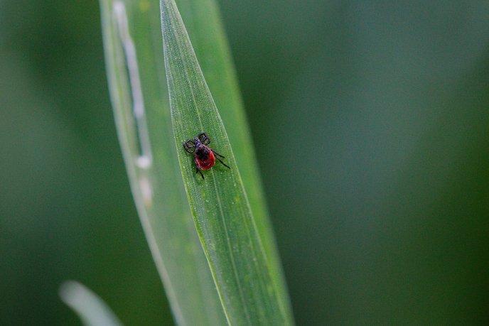plantas que afastam os insetos