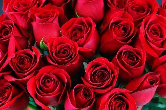 Kết quả hình ảnh cho Hoa hồng đỏ