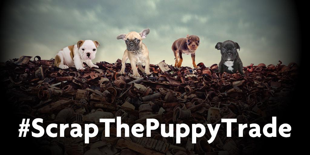 #scrapthepuppytrade.jpg-large