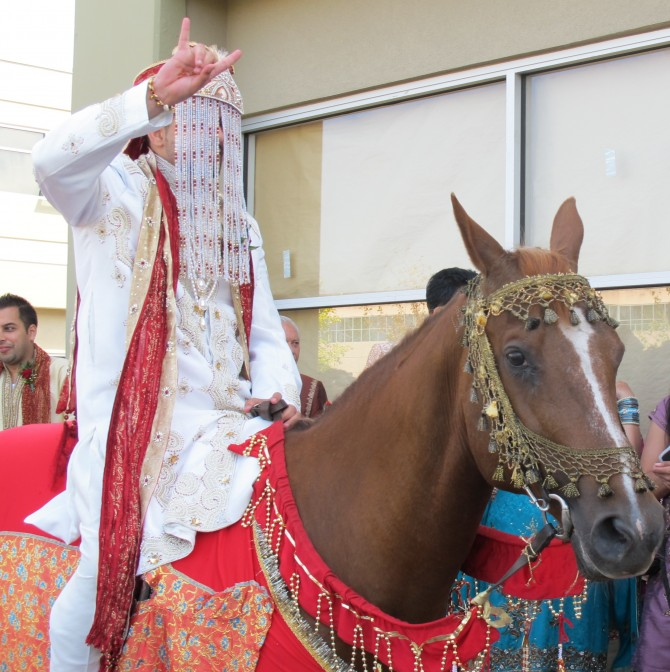 baraat groom riding horse