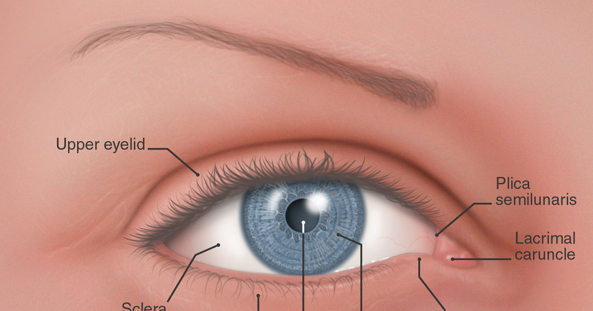 plica semilunaris swollen eye allergies - 1200×630