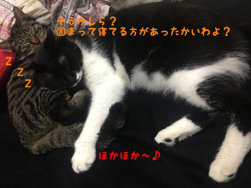 猫の正しいお風呂の入れ方と乾かし方!嫌がる猫を上手に洗う方法