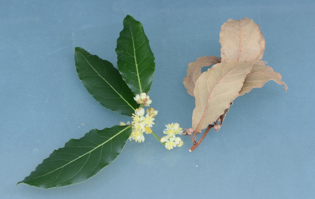 Wet aand Dry Bay leaf