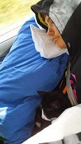 Robert och Findus sover på vägen hem