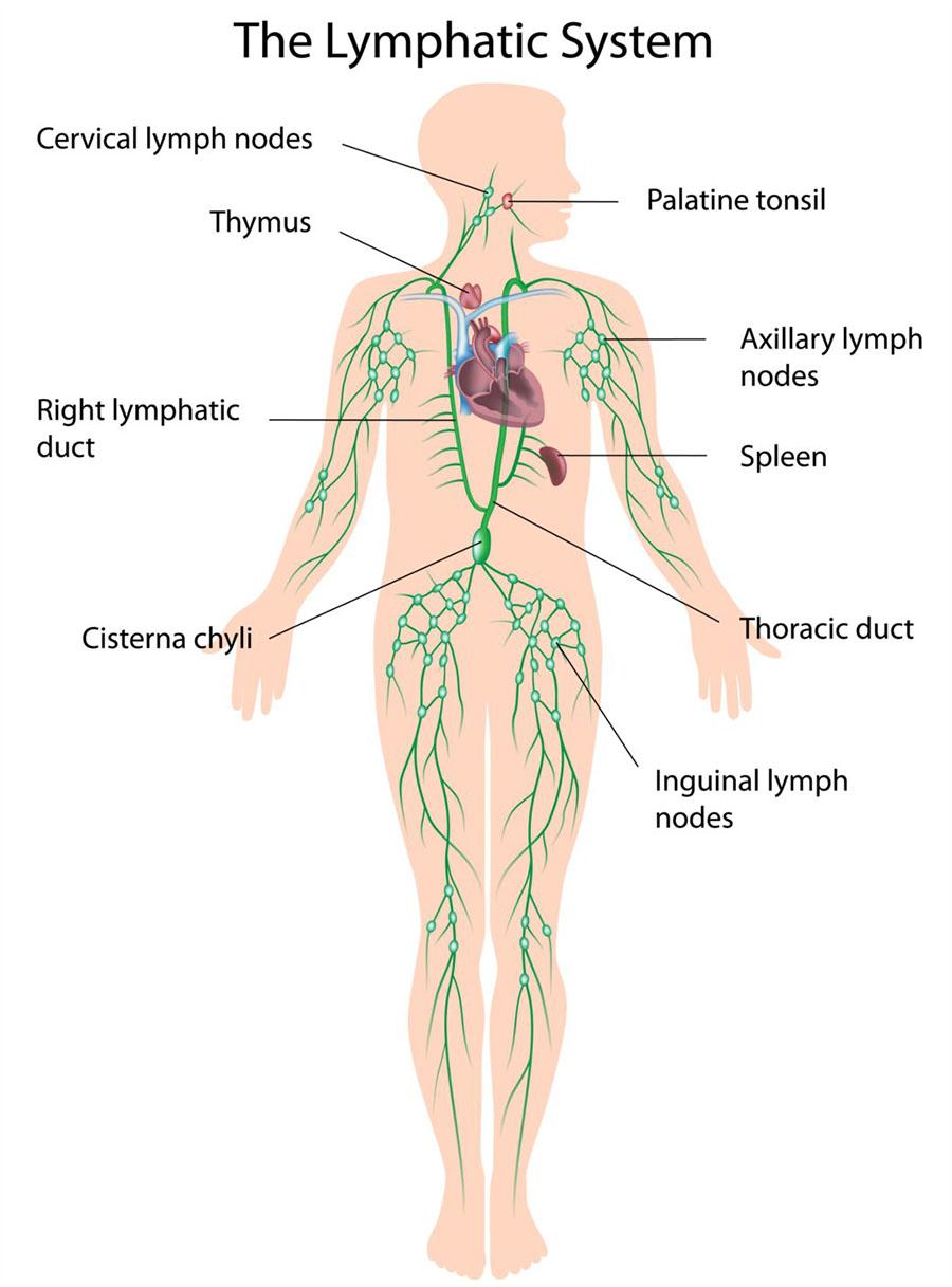 التهاب الغدد الليمفاوية