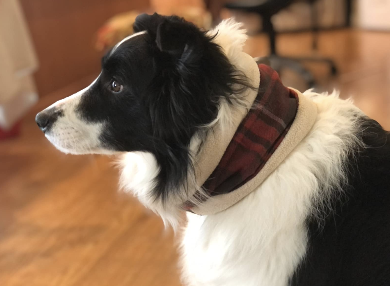 Dog wearing plaid, sherpa-lined scarf | Products for winter dogs