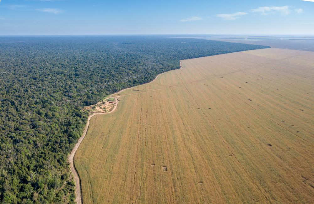 Tornar o agronegócio mais sustentável é importante e já existem mercados interessados nessa migração. (Fonte: Paralaxis/Shutterstock)