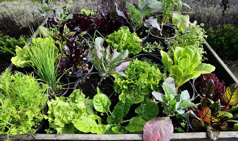 veggiegarden.jpg