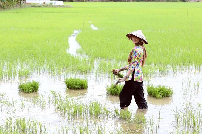 Số đề Việt cung cấp mọi thông tin về nằm mơ thấy cấy lúa