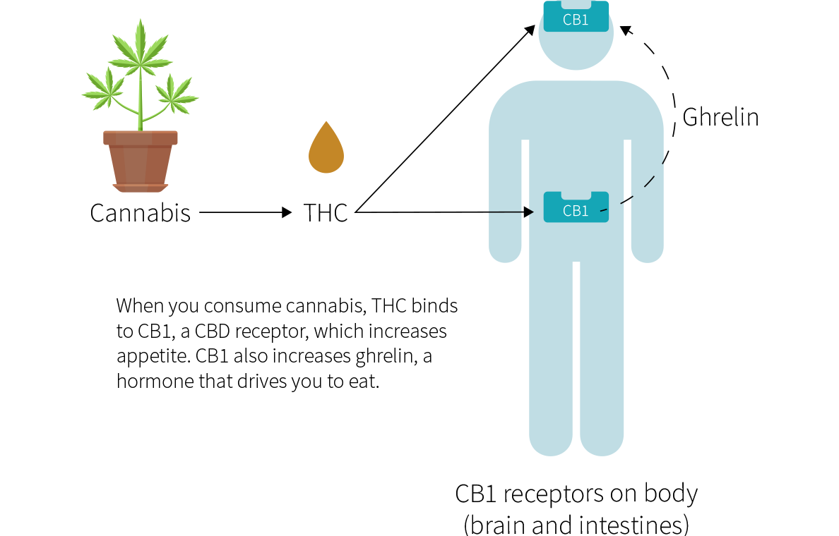 Best marijuana strains appetite
