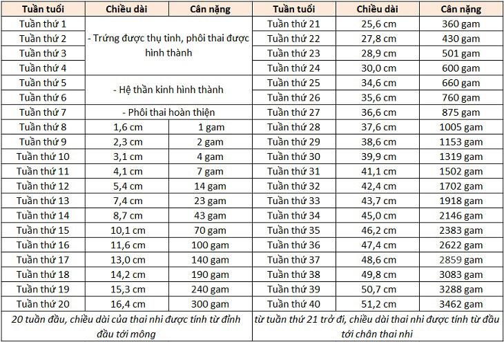 Bảng cân nặng, chiều dài của thai nhi theo tiêu chuẩn của WHO