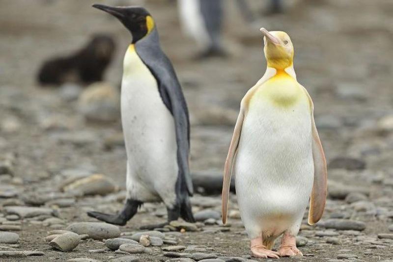 888b Giải mã-Mơ thấy chim cánh cụt