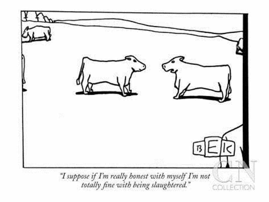cow slaughter not fine.jpg