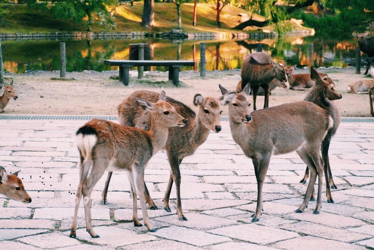 動物の群れ  自動的に生成された説明