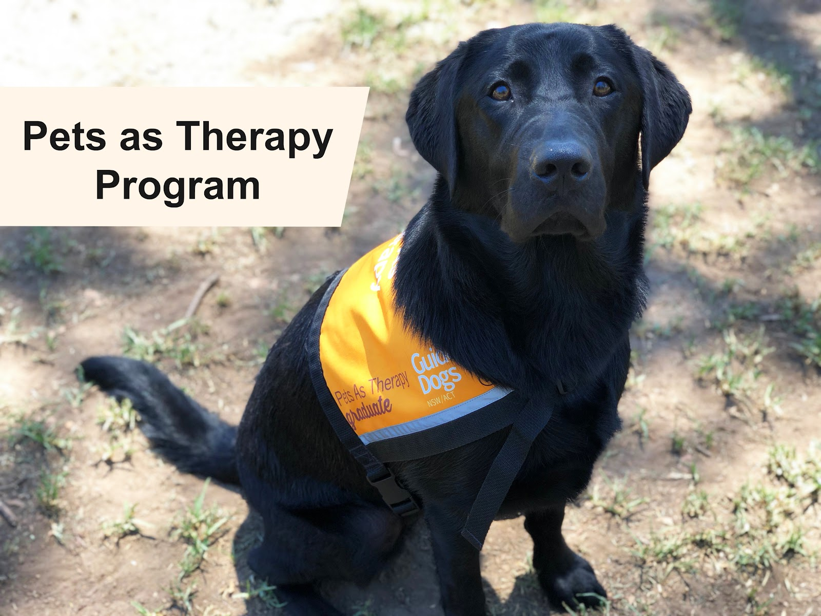 94757c8f129a What is Pets As Therapy (PAT) Program