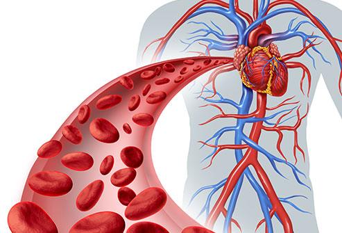 Increase Blood Flow