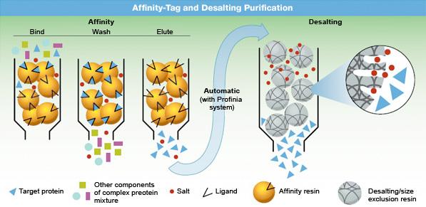 affinity electrophoresis