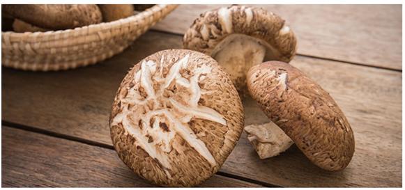 Can dogs eat Shiitake Mushrooms