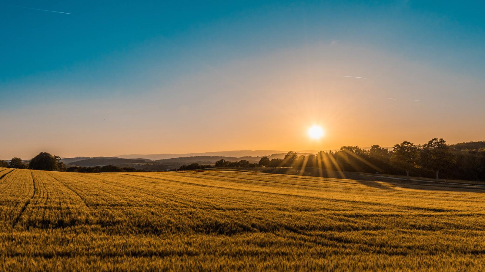 buying a farm, 5 Reasons Why Buying a Farm is a Good Idea