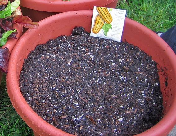 Potting Soil Vs. Garden Soil - A Complete Comparison