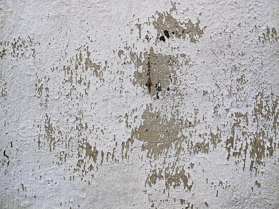 Damp Issues In House