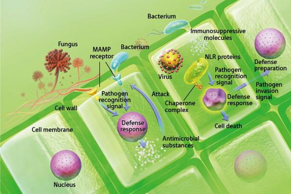 plant response pathway