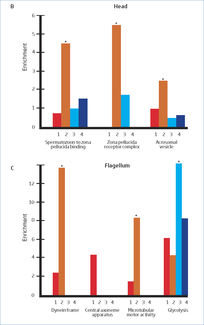 Diversity of the spermatozoon proteome associated with the intensity of sperm competition. B-C) Enrichment of proteins belonging to different functional groups related to the head (B) and the flagellum (C).